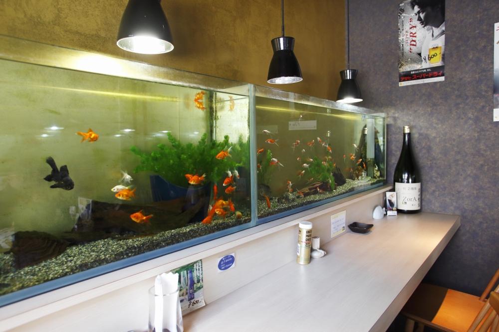 熱帯魚のいるカフェ ゾラ
